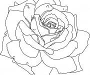 Coloriage Roses stylisé