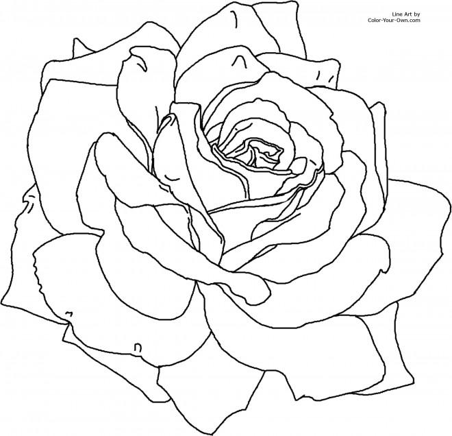 Coloriage et dessins gratuits Roses stylisé à imprimer