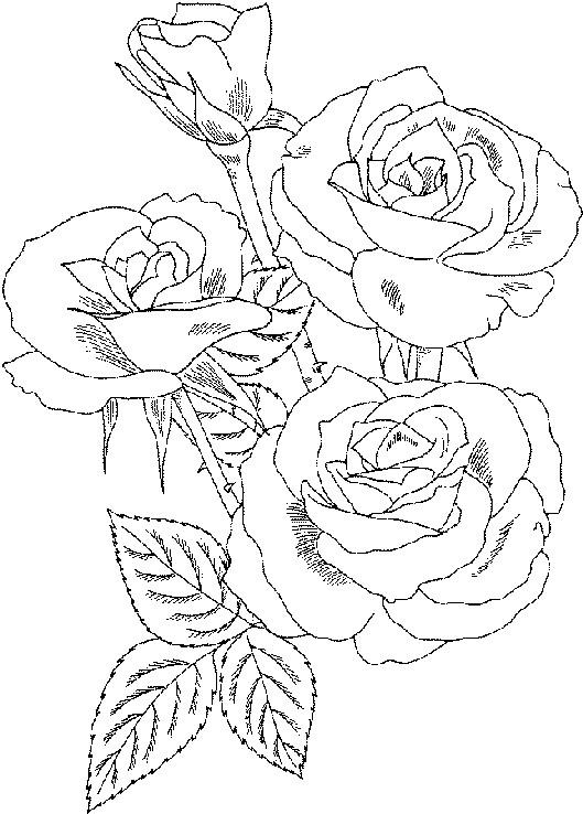 Coloriage et dessins gratuits Roses sur ordinateur à imprimer