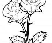 Coloriage Roses vecteur