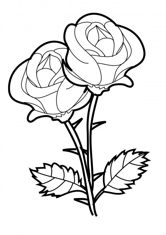 Coloriage et dessins gratuits Roses vecteur à imprimer