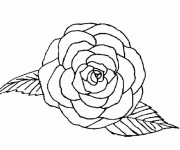 Coloriage Roses vue de face