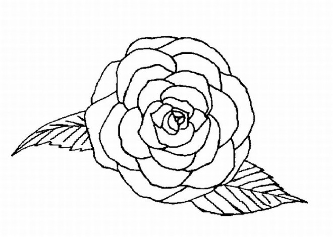 coloriage roses vue de face dessin gratuit imprimer. Black Bedroom Furniture Sets. Home Design Ideas