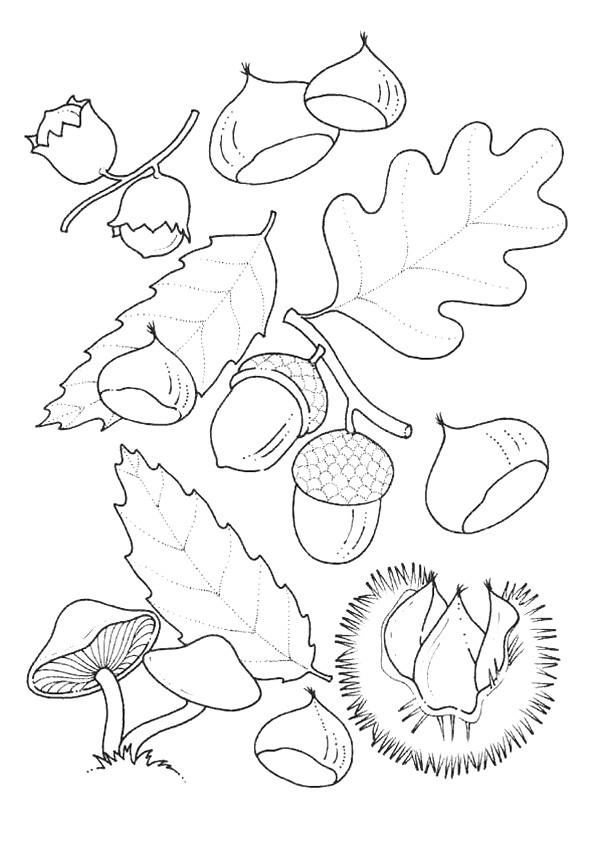 Coloriage et dessins gratuits Feuilles et Fruits de l'Automne à imprimer