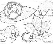 Coloriage Fruits et Feuilles d'Automne