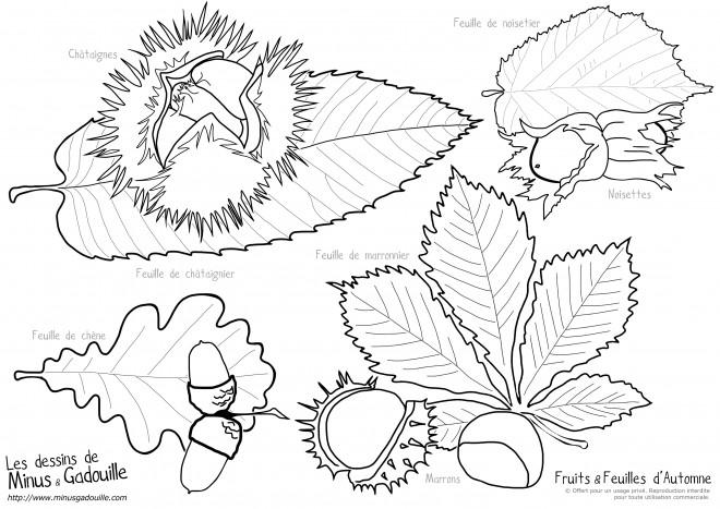 Coloriage Fruits Et Feuilles Dautomne Dessin Gratuit à Imprimer