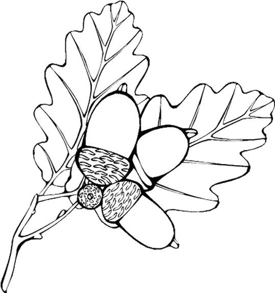 Coloriage et dessins gratuits Fruits et Feuilles d'Automne vecteur à imprimer