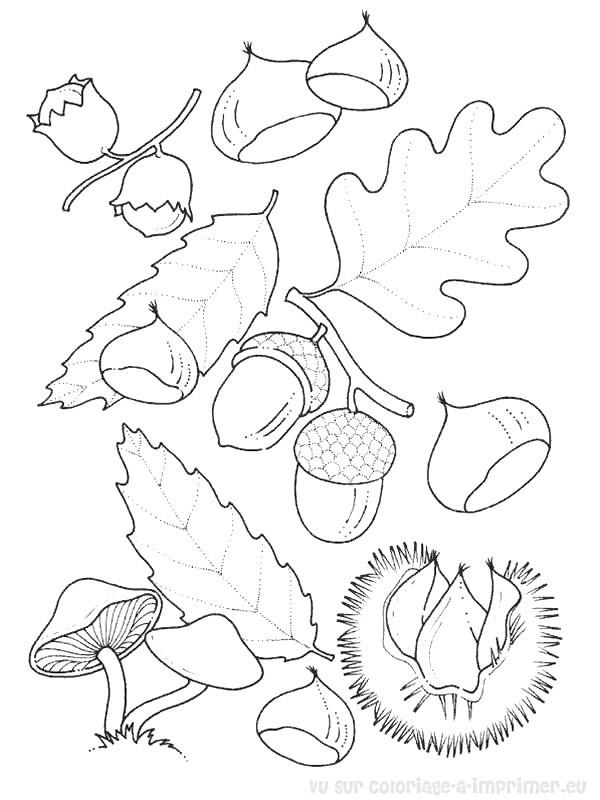 Coloriage et dessins gratuits Fruits et Feuilles en Automne au crayon à imprimer