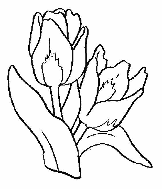 Coloriage des fleurs de tulipes couleur dessin gratuit imprimer - Coloriage fleur tulipe ...