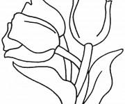 Coloriage et dessins gratuit Des Tulipes fleuris à imprimer