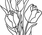 Coloriage et dessins gratuit Fleurs de Tulipe à imprimer