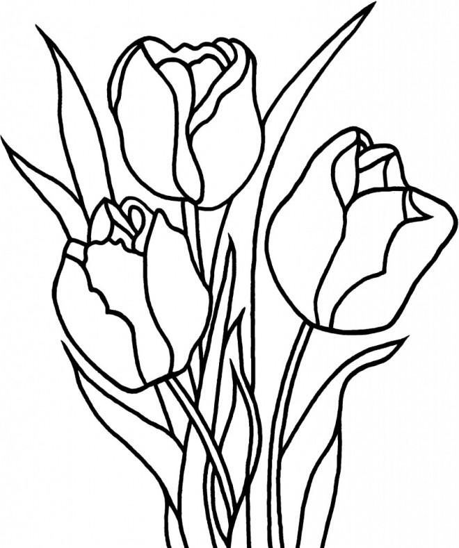 Coloriage Fleurs De Tulipe Dessin Gratuit A Imprimer