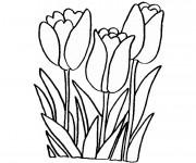 Coloriage et dessins gratuit Fleurs Tulipe à imprimer
