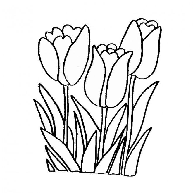 Coloriage et dessins gratuits Fleurs Tulipe à imprimer