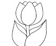Coloriage et dessins gratuit Image Tulipe à imprimer