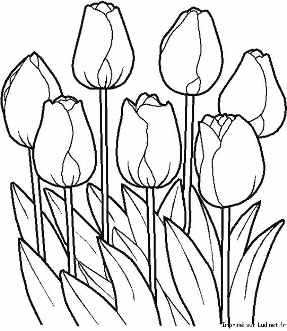 Coloriage et dessins gratuits Jolies Tulipes vectoriel à imprimer