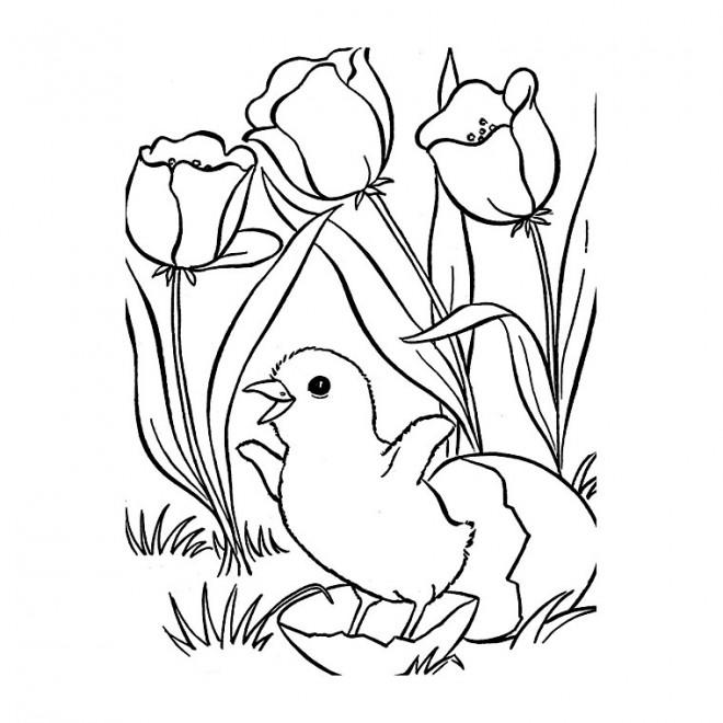 Coloriage et dessins gratuits La Tulipe et Le Poussin à imprimer