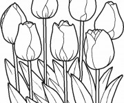 Coloriage et dessins gratuit Les Pétales de Tulipe Fermées à imprimer