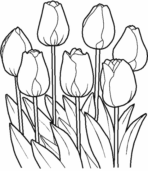 Coloriage et dessins gratuits Les Pétales de Tulipe Fermées à imprimer