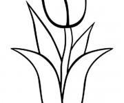 Coloriage tulipe 38 gratuit imprimer en ligne - Tulipe a dessiner ...