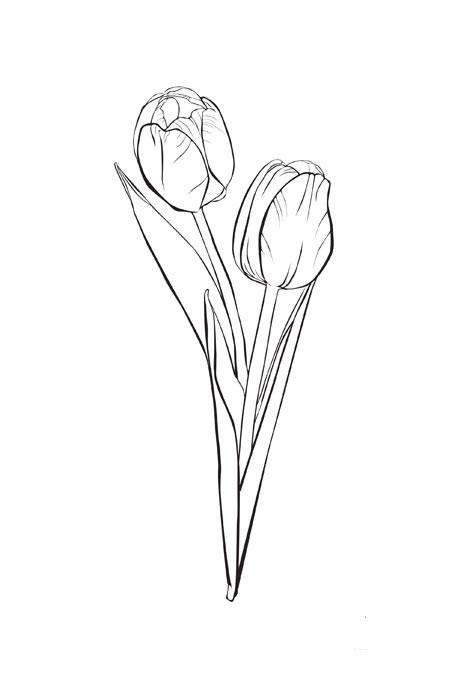 Coloriage tulipe 33 dessin gratuit imprimer - Tulipe a dessiner ...