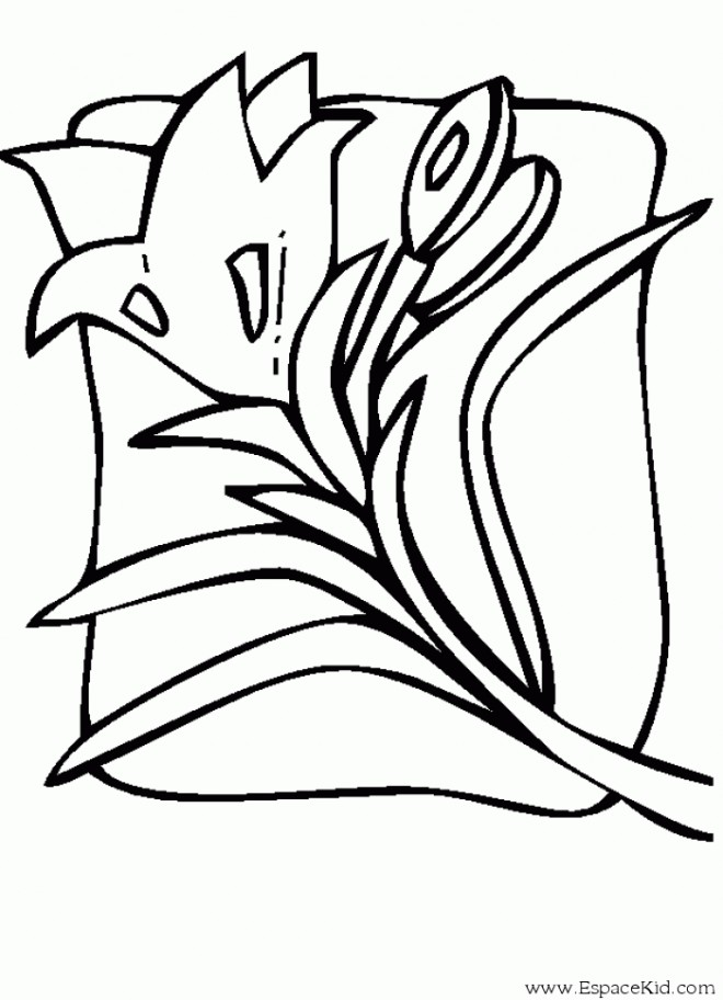 Coloriage tulipe 38 dessin gratuit imprimer - Tulipe a dessiner ...