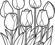 Coloriage Tulipe au Jardin Potager
