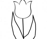 Coloriage et dessins gratuit Tulipe en couleur à imprimer