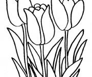 Coloriage et dessins gratuit Tulipe en ligne à imprimer