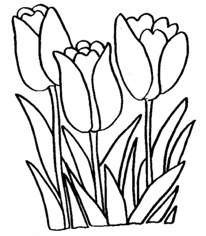 Coloriage et dessins gratuits Tulipe en ligne à imprimer