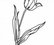 Coloriage Tulipe facile à colorier