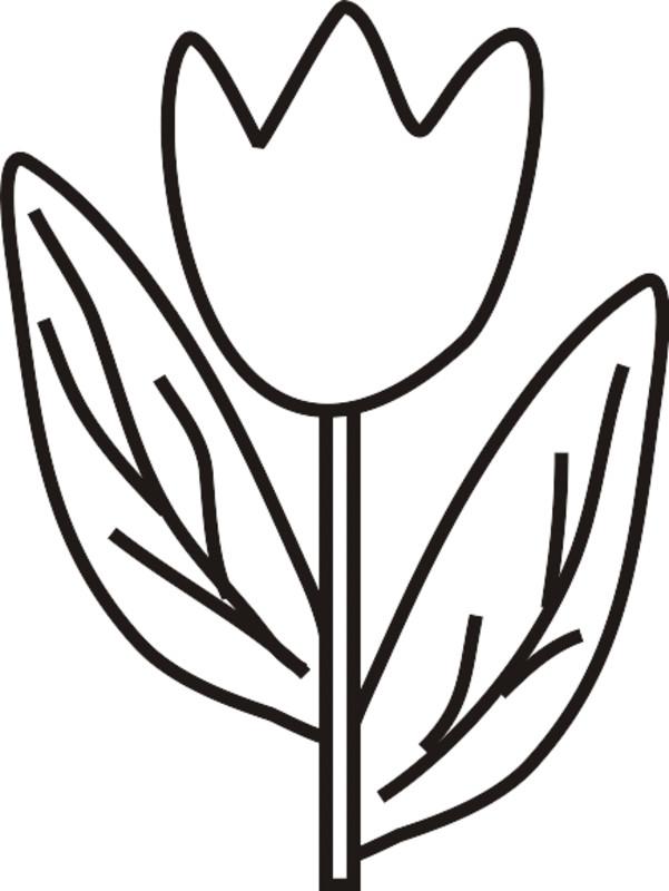Coloriage Tulipe Facile Dessine Par Le Crayon