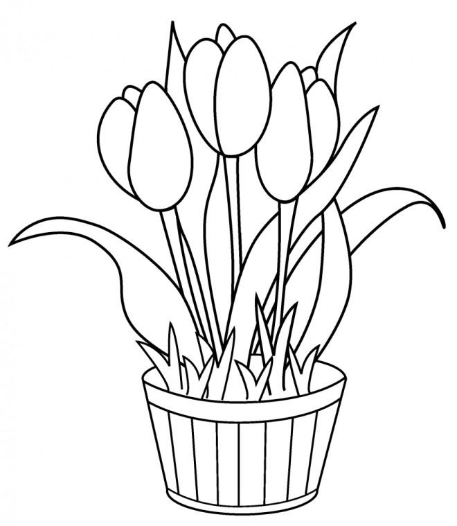Coloriage et dessins gratuits Tulipes à décorer à imprimer