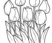 Coloriage et dessins gratuit Tulipes Fermées à imprimer