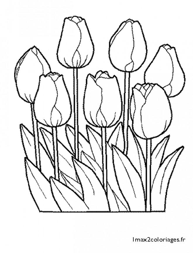 Coloriage et dessins gratuits Tulipes Fermées à imprimer