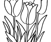 Coloriage Tulipes formidables