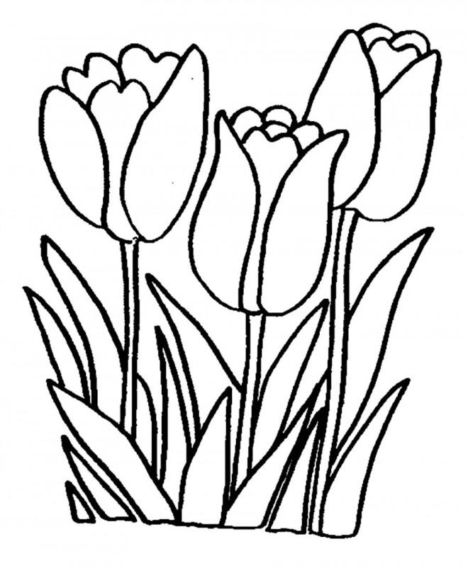Coloriage et dessins gratuits Tulipes formidables à imprimer