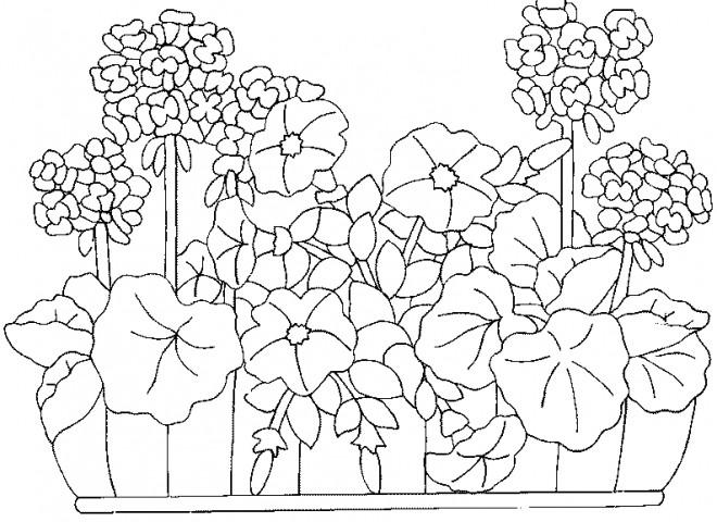 Coloriage jardin fleuri dessin gratuit imprimer - Coloriage fleurs et plantes a imprimer ...