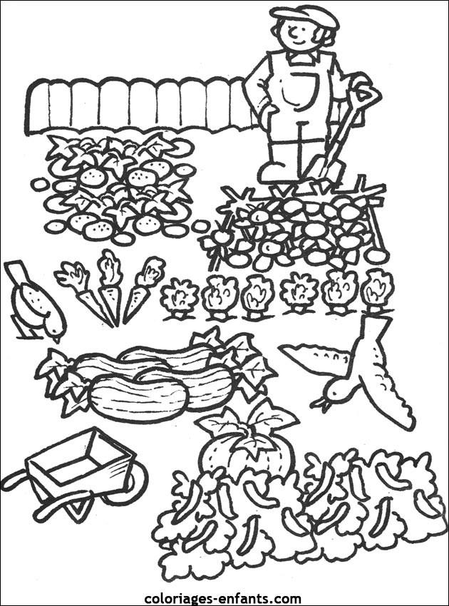 Coloriage et dessins gratuits Jardin potager à imprimer