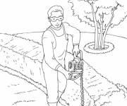 Coloriage Jardinier taille les cèdres
