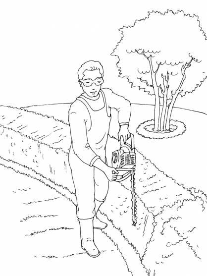 Coloriage et dessins gratuits Jardinier taille les cèdres à imprimer