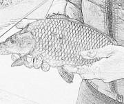 Coloriage Image de poisson en couleur