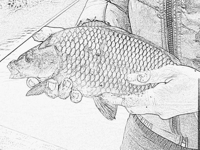 Coloriage et dessins gratuits Image de poisson en couleur à imprimer