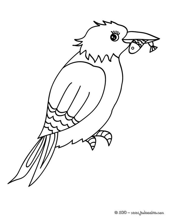 Coloriage et dessins gratuits Oiseau Pêcheur à imprimer