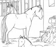 Coloriage et dessins gratuit Un Cheval et son petit dans le stable à imprimer