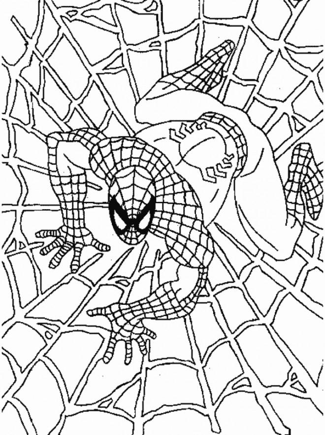 Coloriage Spiderman Couleur Dessin Gratuit A Imprimer