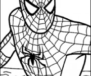Coloriage Spiderman en vecteur