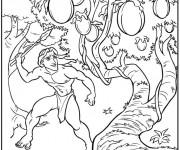 Coloriage Tarzan collecte Les Fruits