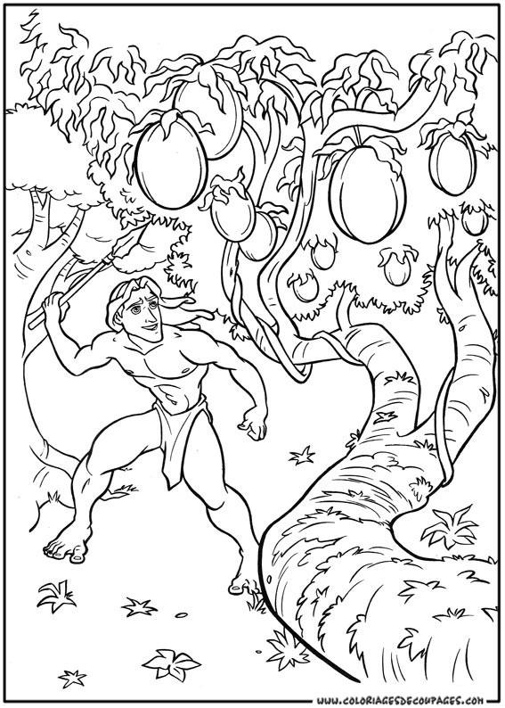 Coloriage et dessins gratuits Tarzan collecte Les Fruits à imprimer